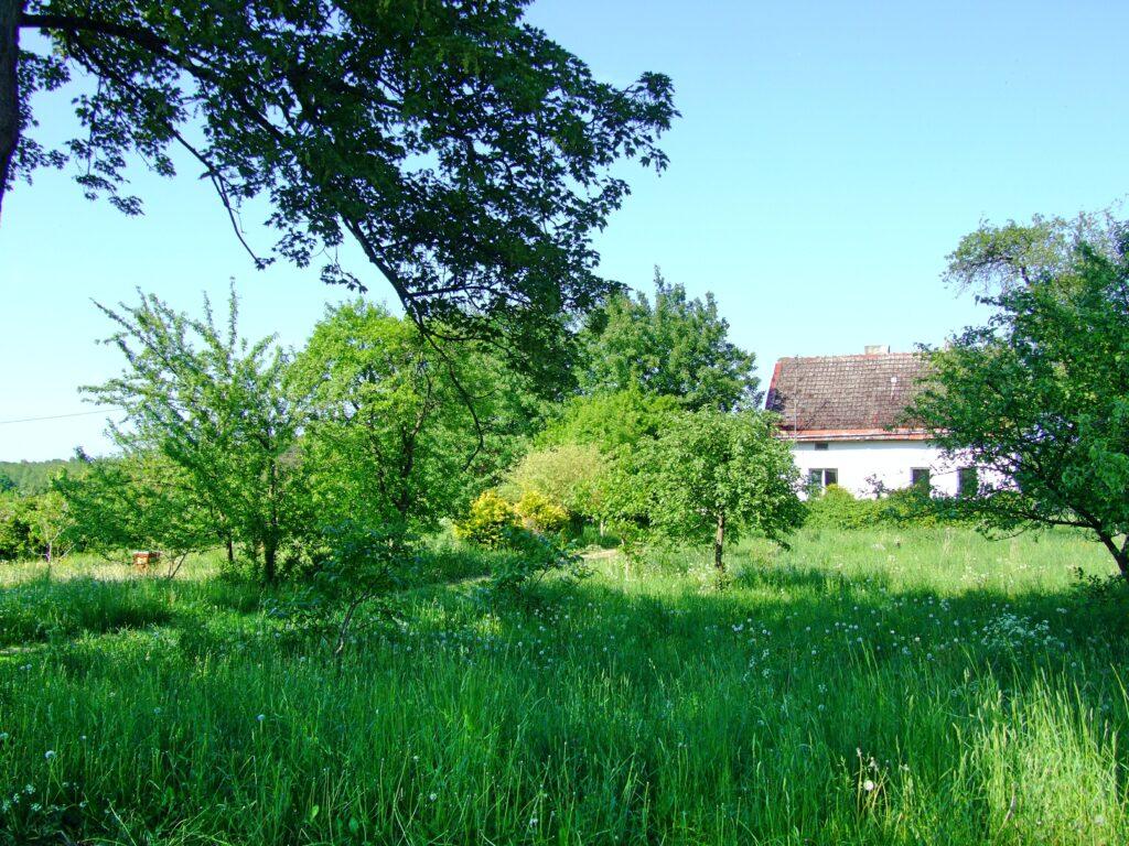 Sad zazielenił się wiosną (po lewej widoczny pierwszy ul)